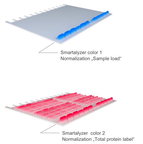 Image: Smartalyzer Layer 1 (Normalization protein sample loading), Layer 2 (Normalization labeling efficiency)