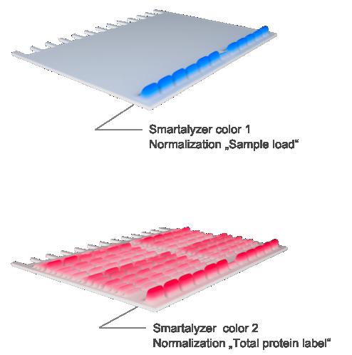Image: Smartalyzer Layer 1 (Normalization protein sample loading), Layer 2 (Normalization labeling efficiency)